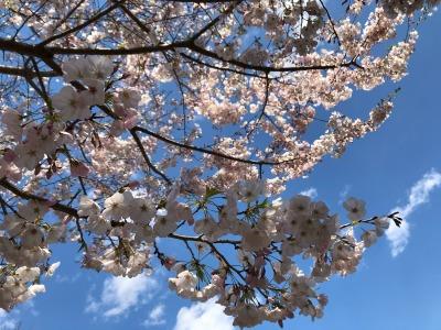 【イシモク体験館】週末構造見学会お休みのお知らせ