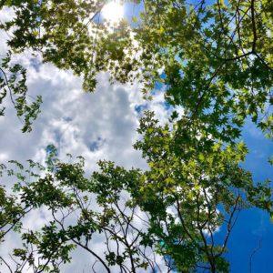 【9月29日開催!】庭師体験!×イシモク体験館見学会