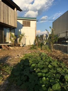 畑と庭の楽しみ