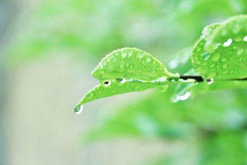 【雨天のため開催中止】 Vol5イシモクマルシェ市場