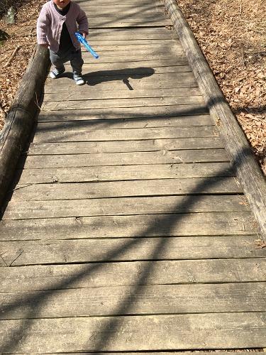 木道を散歩