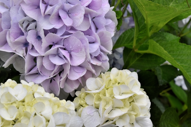 【Vol.8 イシモクマルシェ市場 開催中止のお知らせ】
