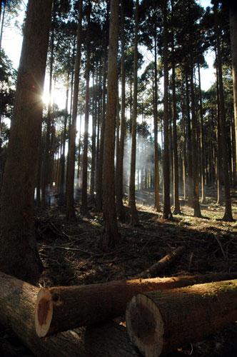 林業の仕事、なにしているのでしょうか